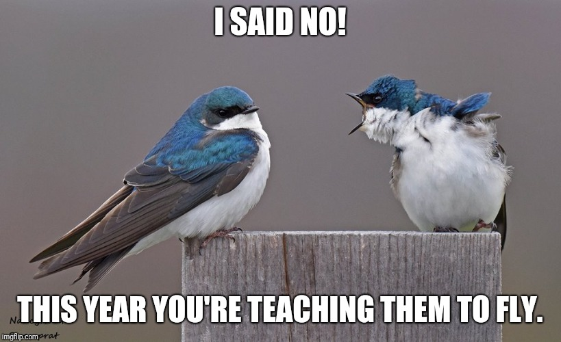 I SAID NO! THIS YEAR YOU'RE TEACHING THEM TO FLY. | image tagged in birds | made w/ Imgflip meme maker