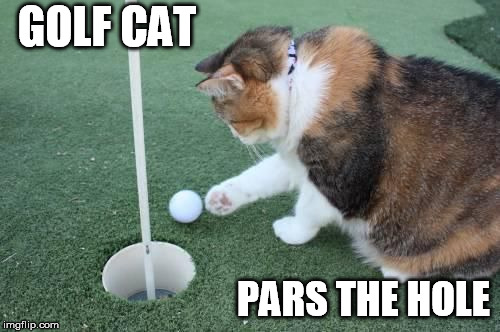 GOLF CAT PARS THE HOLE | made w/ Imgflip meme maker