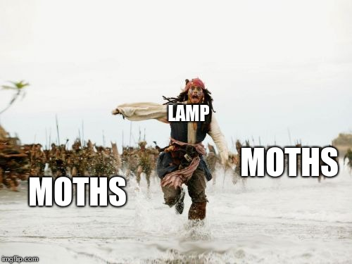 Jack Sparrow Being Chased Meme | LAMP MOTHS MOTHS | image tagged in memes,jack sparrow being chased | made w/ Imgflip meme maker