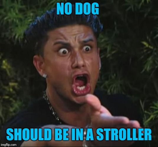 DJ Pauly D Meme | NO DOG SHOULD BE IN A STROLLER | image tagged in memes,dj pauly d | made w/ Imgflip meme maker