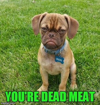 Grumpy Dog | YOU'RE DEAD MEAT | image tagged in grumpy dog | made w/ Imgflip meme maker