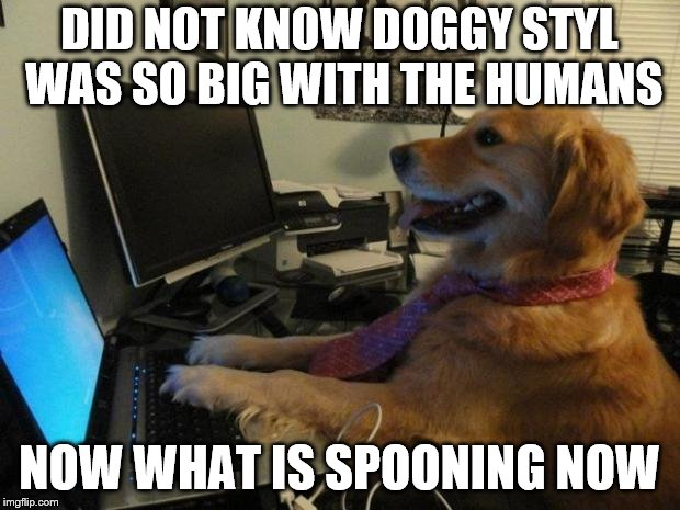 did not know that | DID NOT KNOW DOGGY STYL WAS SO BIG WITH THE HUMANS NOW WHAT IS SPOONING NOW | image tagged in dog behind a computer,dog funny,funny dog,funny dog memes,funny memes,funny meme | made w/ Imgflip meme maker
