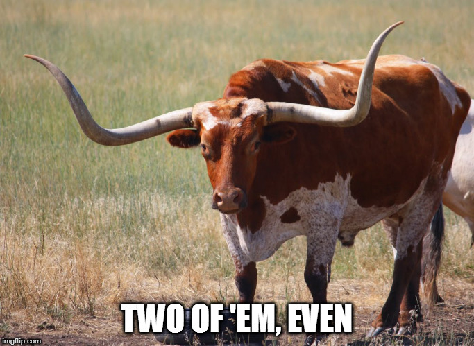 Bull with big horns | TWO OF 'EM, EVEN | image tagged in bull with big horns | made w/ Imgflip meme maker
