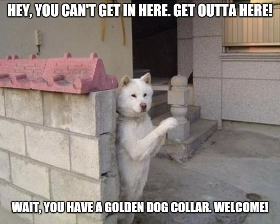 You can't get in here | HEY, YOU CAN'T GET IN HERE. GET OUTTA HERE! WAIT, YOU HAVE A GOLDEN DOG COLLAR. WELCOME! | image tagged in dog,entrance,collar,gold,welcome,memes | made w/ Imgflip meme maker
