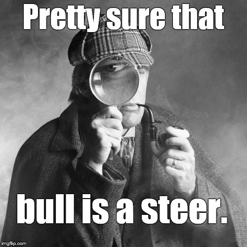 Sherlock Holmes | Pretty sure that bull is a steer. | image tagged in sherlock holmes | made w/ Imgflip meme maker