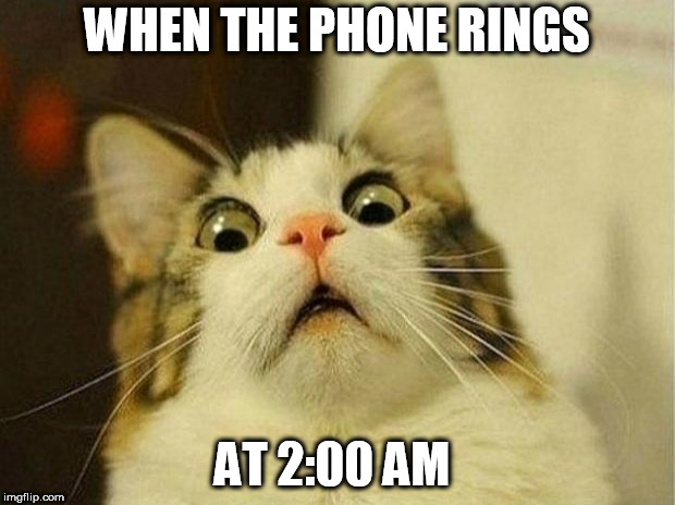 Scared Cat | WHEN THE PHONE RINGS AT 2:00 AM | image tagged in memes,scared cat | made w/ Imgflip meme maker