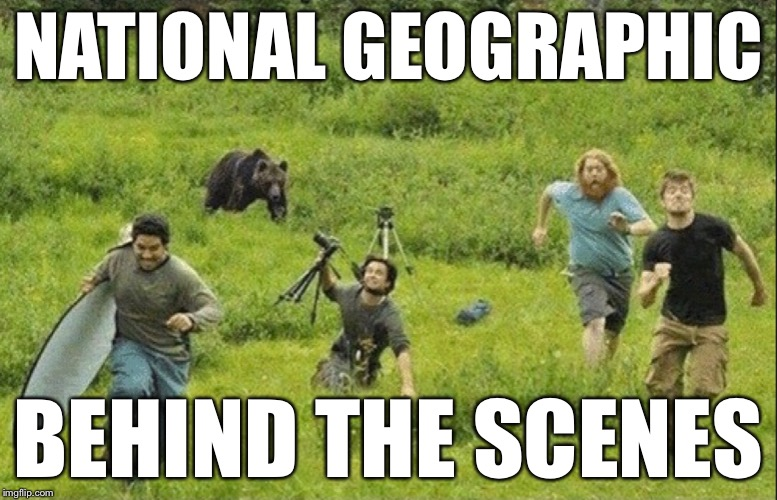 Behind the scenes | NATIONAL GEOGRAPHIC BEHIND THE SCENES | image tagged in national geographic,bear,behind the scenes | made w/ Imgflip meme maker