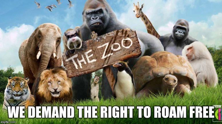 Zoo Memes Gifs Imgflip