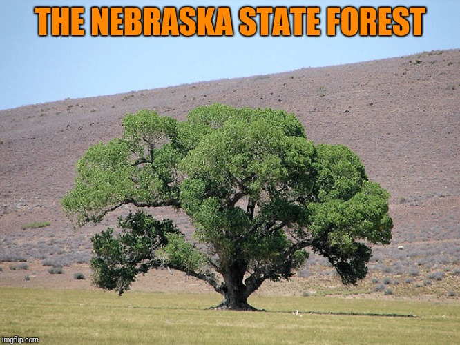Help Wanted: Arborist. Must Have Own Pruner | THE NEBRASKA STATE FOREST | image tagged in nebraska,forest | made w/ Imgflip meme maker