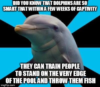 Dolphin | DID YOU KNOW THAT DOLPHINS ARE SO SMART THAT WITHIN A FEW WEEKS OF CAPTIVITY THEY CAN TRAIN PEOPLE TO STAND ON THE VERY EDGE OF THE POOL AND | image tagged in dolphin | made w/ Imgflip meme maker