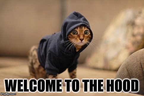 Hoody Cat Meme | WELCOME TO THE HOOD | image tagged in memes,hoody cat | made w/ Imgflip meme maker