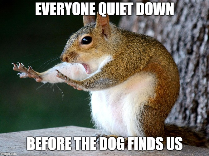 Raydog is coming | EVERYONE QUIET DOWN BEFORE THE DOG FINDS US | image tagged in raydog | made w/ Imgflip meme maker