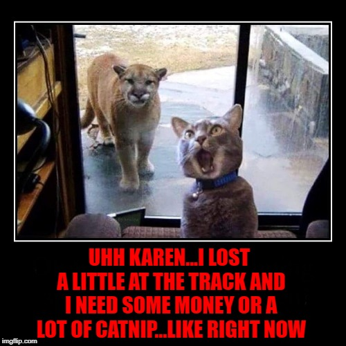 Hate it when those collectors come!!! | UHH KAREN...I LOST A LITTLE AT THE TRACK AND I NEED SOME MONEY OR A LOT OF CATNIP...LIKE RIGHT NOW | image tagged in mountain lion and cat,memes,gambling,funny,animals,cats | made w/ Imgflip meme maker