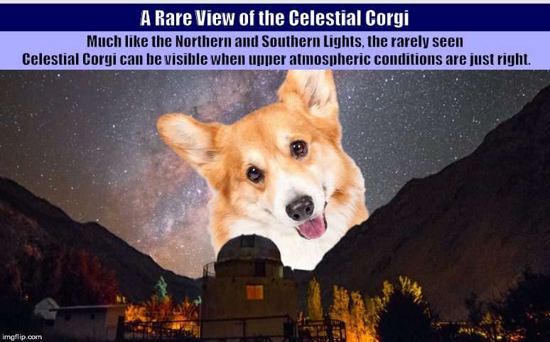 A Rare View of the Celestial Corgi | image tagged in corgi,pembroke welsh corgi,northern lights,funny,memes,astronomy | made w/ Imgflip meme maker