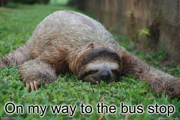 Sleeping sloth | On my way to the bus stop | image tagged in sleeping sloth | made w/ Imgflip meme maker