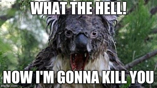 Angry Koala | WHAT THE HELL! NOW I'M GONNA KILL YOU | image tagged in memes,angry koala | made w/ Imgflip meme maker
