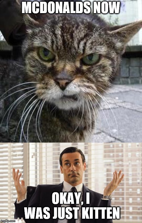 MCDONALDS NOW OKAY, I WAS JUST KITTEN | image tagged in angry cat,john hamm hands up mad men | made w/ Imgflip meme maker