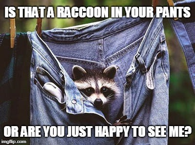 Just a little? | IS THAT A RACCOON IN YOUR PANTS OR ARE YOU JUST HAPPY TO SEE ME? | image tagged in raccoon,happy to see me,racoon in jeans | made w/ Imgflip meme maker