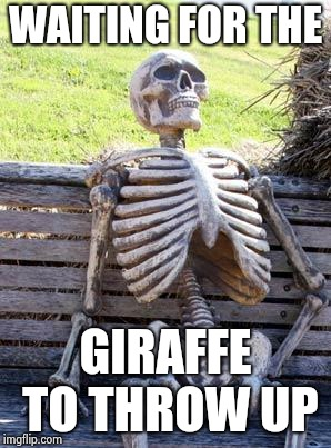 Waiting Skeleton Meme | WAITING FOR THE GIRAFFE TO THROW UP | image tagged in memes,waiting skeleton | made w/ Imgflip meme maker