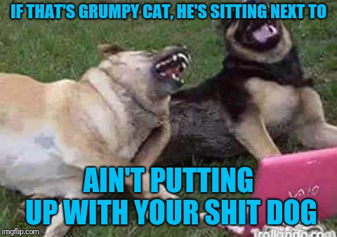 IF THAT'S GRUMPY CAT, HE'S SITTING NEXT TO AIN'T PUTTING UP WITH YOUR SHIT DOG | made w/ Imgflip meme maker