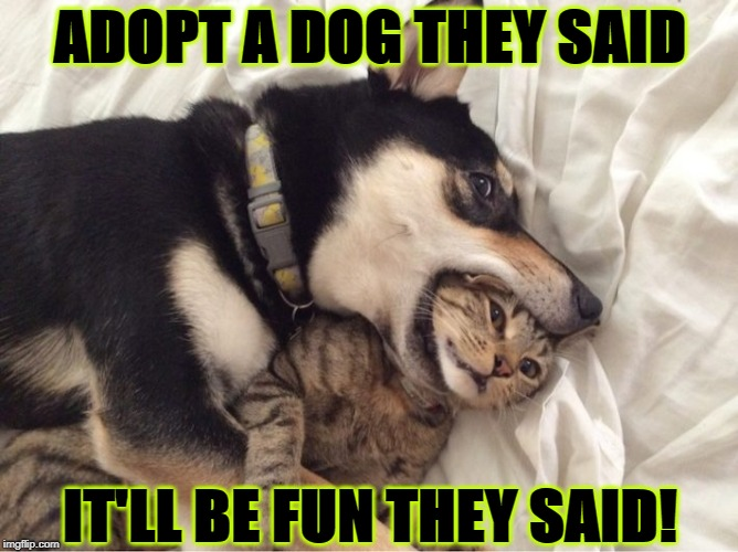 ADOPT A DOG THEY SAID IT'LL BE FUN THEY SAID! | image tagged in it'll be fun | made w/ Imgflip meme maker