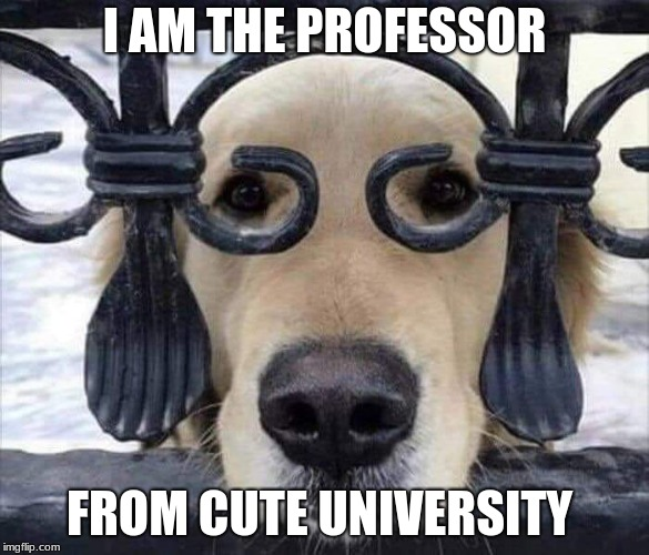It just takes effort to stand out.  | I AM THE PROFESSOR FROM CUTE UNIVERSITY | image tagged in intelligent dog,stand out,cute dog | made w/ Imgflip meme maker