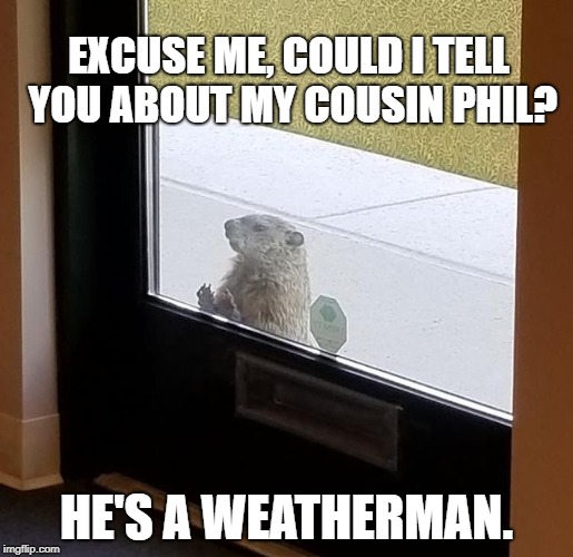EXCUSE ME, COULD I TELL YOU ABOUT MY COUSIN PHIL? HE'S A WEATHERMAN. | image tagged in groundhog | made w/ Imgflip meme maker
