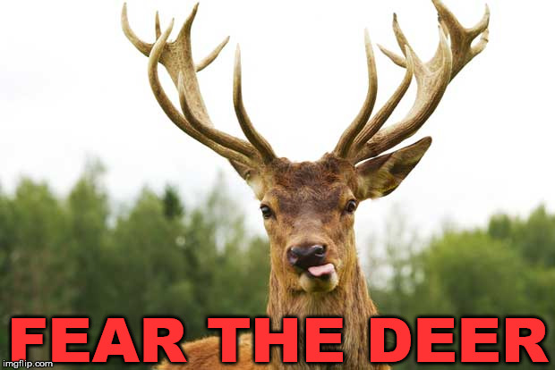 Reindeer | FEAR THE DEER | image tagged in reindeer | made w/ Imgflip meme maker