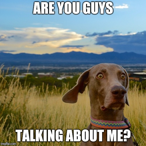 Worried Dog | ARE YOU GUYS TALKING ABOUT ME? | image tagged in worried dog | made w/ Imgflip meme maker