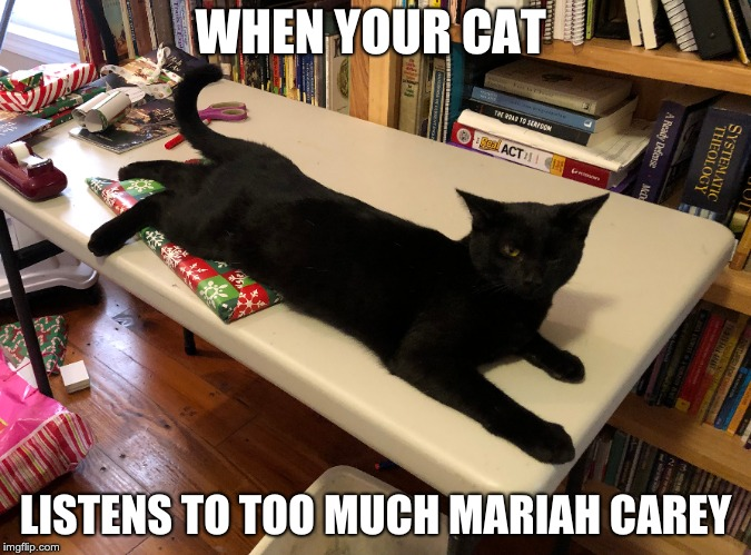 WHEN YOUR CAT; LISTENS TO TOO MUCH MARIAH CAREY | image tagged in hoth777 | made w/ Imgflip meme maker