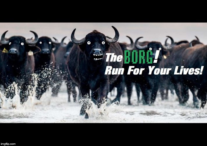 Water Buffalo Bills Break Out | image tagged in the borg | made w/ Imgflip meme maker