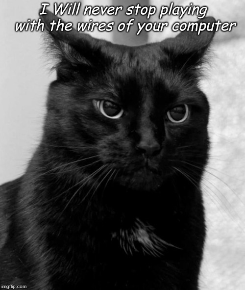 Black cat pissed | I Will never stop playing with the wires of your computer | image tagged in black cat pissed | made w/ Imgflip meme maker