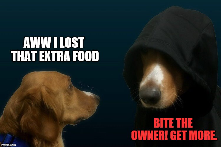 Evil dog | AWW I LOST THAT EXTRA FOOD BITE THE OWNER! GET MORE. | image tagged in evil dog | made w/ Imgflip meme maker