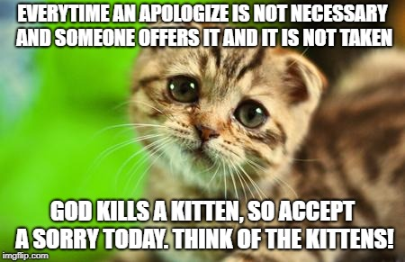 Sorry Cat | EVERYTIME AN APOLOGIZE IS NOT NECESSARY AND SOMEONE OFFERS IT AND IT IS NOT TAKEN GOD KILLS A KITTEN, SO ACCEPT A SORRY TODAY. THINK OF THE  | image tagged in sorry cat | made w/ Imgflip meme maker