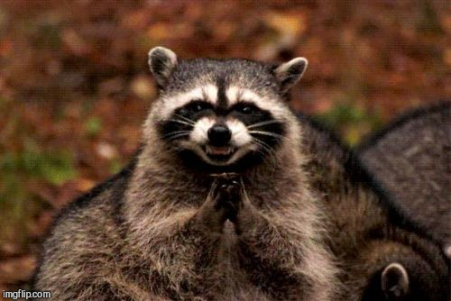 Evil Plotting Raccoon Meme | . | image tagged in memes,evil plotting raccoon | made w/ Imgflip meme maker