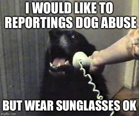 I WOULD LIKE TO REPORTINGS DOG ABUSE BUT WEAR SUNGLASSES OK | image tagged in yes this is dog | made w/ Imgflip meme maker
