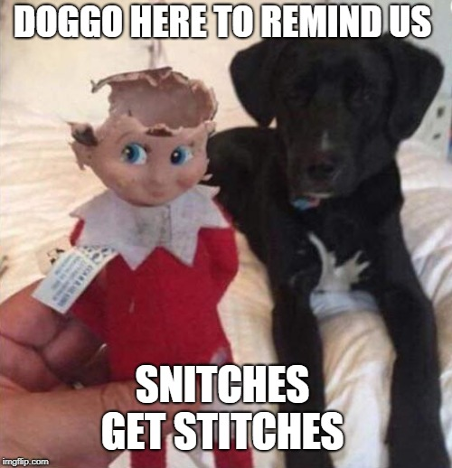 Elf on the Shelf gets chewed like food | DOGGO HERE TO REMIND US SNITCHES GET STITCHES | image tagged in elf on the shelf,doggo,dogs,snitch,christmas memes,memes | made w/ Imgflip meme maker