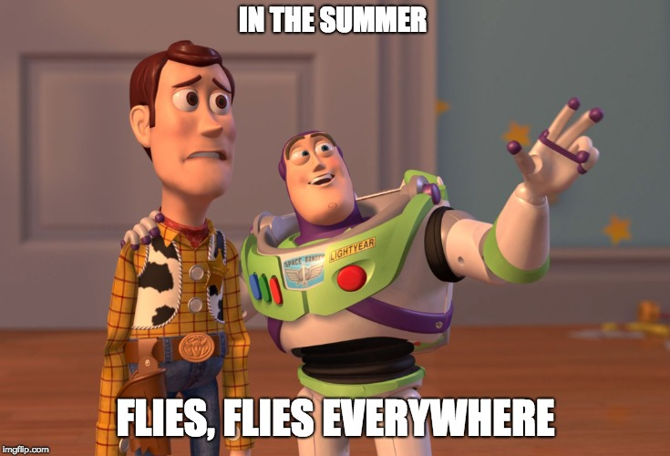 X, X Everywhere Meme | IN THE SUMMER FLIES, FLIES EVERYWHERE | image tagged in memes,x x everywhere | made w/ Imgflip meme maker
