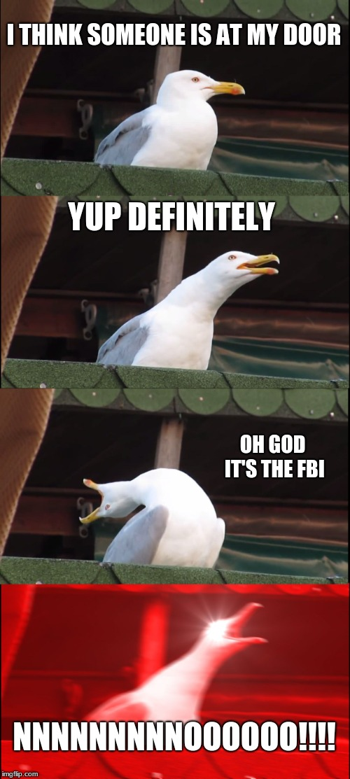 Inhaling Seagull Meme | I THINK SOMEONE IS AT MY DOOR YUP DEFINITELY OH GOD IT'S THE FBI NNNNNNNNNOOOOOO!!!! | image tagged in memes,inhaling seagull | made w/ Imgflip meme maker