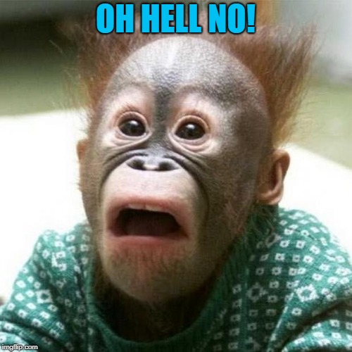 Shocked Monkey | OH HELL NO! | image tagged in shocked monkey | made w/ Imgflip meme maker