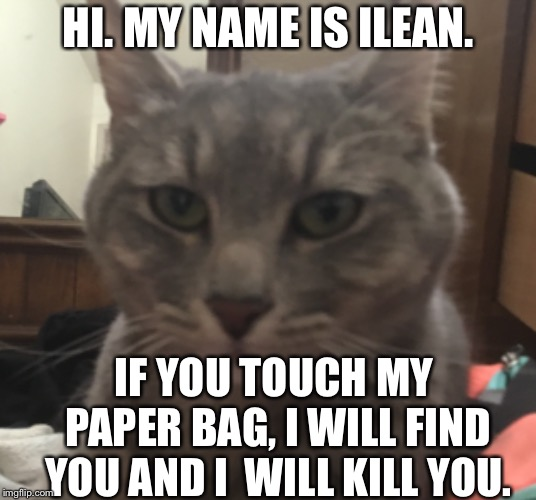 My kitty cat. Her name is iLean. | HI. MY NAME IS ILEAN. IF YOU TOUCH MY PAPER BAG, I WILL FIND YOU AND I  WILL KILL YOU. | image tagged in grumpy cat,cat,cute cat,funny memes,serious cat | made w/ Imgflip meme maker