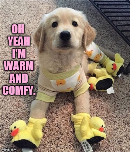 OH YEAH I'M WARM AND COMFY. | made w/ Imgflip meme maker