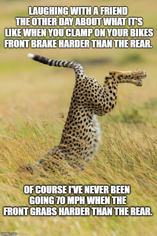 Cheetah Face Plant | LAUGHING WITH A FRIEND THE OTHER DAY ABOUT WHAT IT'S LIKE WHEN YOU CLAMP ON YOUR BIKES FRONT BRAKE HARDER THAN THE REAR. OF COURSE I'VE NEVE | image tagged in wildlife | made w/ Imgflip meme maker