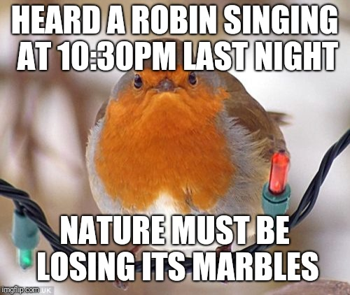 Bah Humbug | HEARD A ROBIN SINGING AT 10:30PM LAST NIGHT NATURE MUST BE LOSING ITS MARBLES | image tagged in memes,bah humbug,bird,funny,funny memes,latest | made w/ Imgflip meme maker