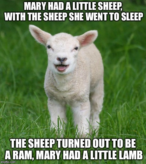 Little lamb | MARY HAD A LITTLE SHEEP, WITH THE SHEEP SHE WENT TO SLEEP THE SHEEP TURNED OUT TO BE A RAM, MARY HAD A LITTLE LAMB | image tagged in little lamb | made w/ Imgflip meme maker