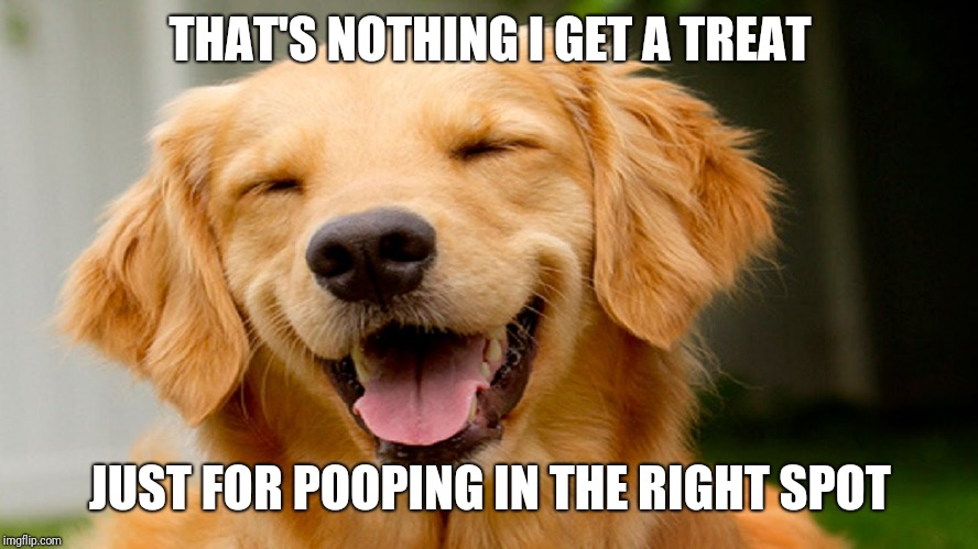 smiling dog | THAT'S NOTHING I GET A TREAT JUST FOR POOPING IN THE RIGHT SPOT | image tagged in smiling dog | made w/ Imgflip meme maker