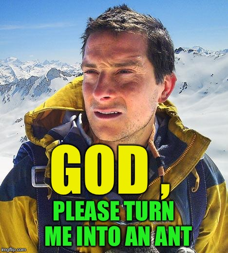 Bear Grylls Meme | GOD , PLEASE TURN  ME INTO AN ANT | image tagged in memes,bear grylls | made w/ Imgflip meme maker
