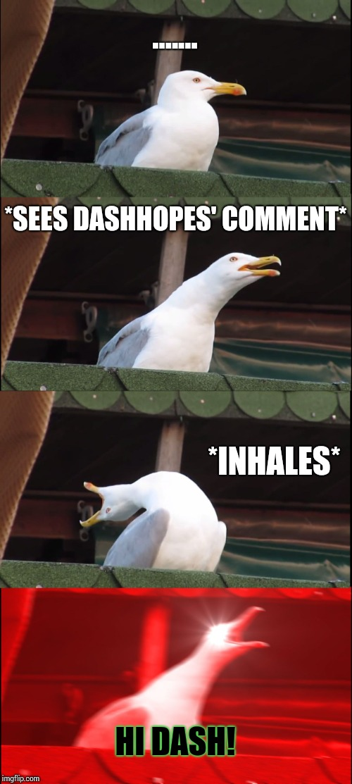 Inhaling Seagull Meme | ....... *SEES DASHHOPES' COMMENT* *INHALES* HI DASH! | image tagged in memes,inhaling seagull | made w/ Imgflip meme maker