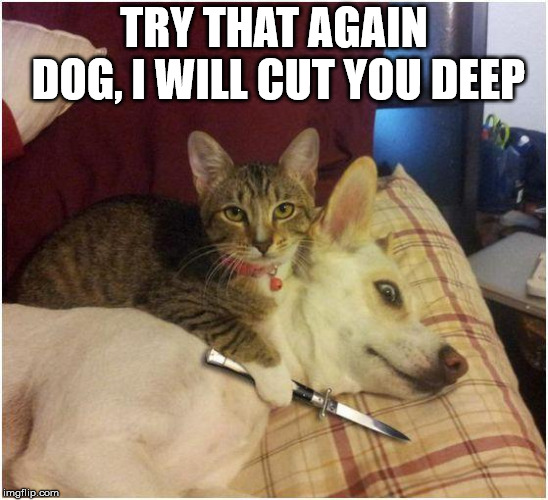 Warning killer cat | TRY THAT AGAIN DOG, I WILL CUT YOU DEEP | image tagged in warning killer cat | made w/ Imgflip meme maker