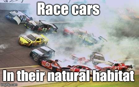 Because Race Car | Race cars In their natural habitat | image tagged in memes,because race car | made w/ Imgflip meme maker